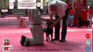 Especializada Staffordshire Bull Terrier   Machos   Allan Hedges    Kcsp 2014