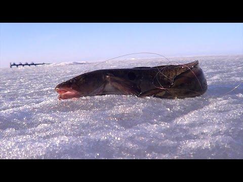 рыбалка зимняя на налима онежское озеро