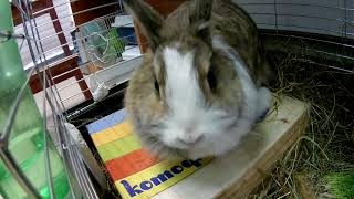 Кролик-Катюшка 3