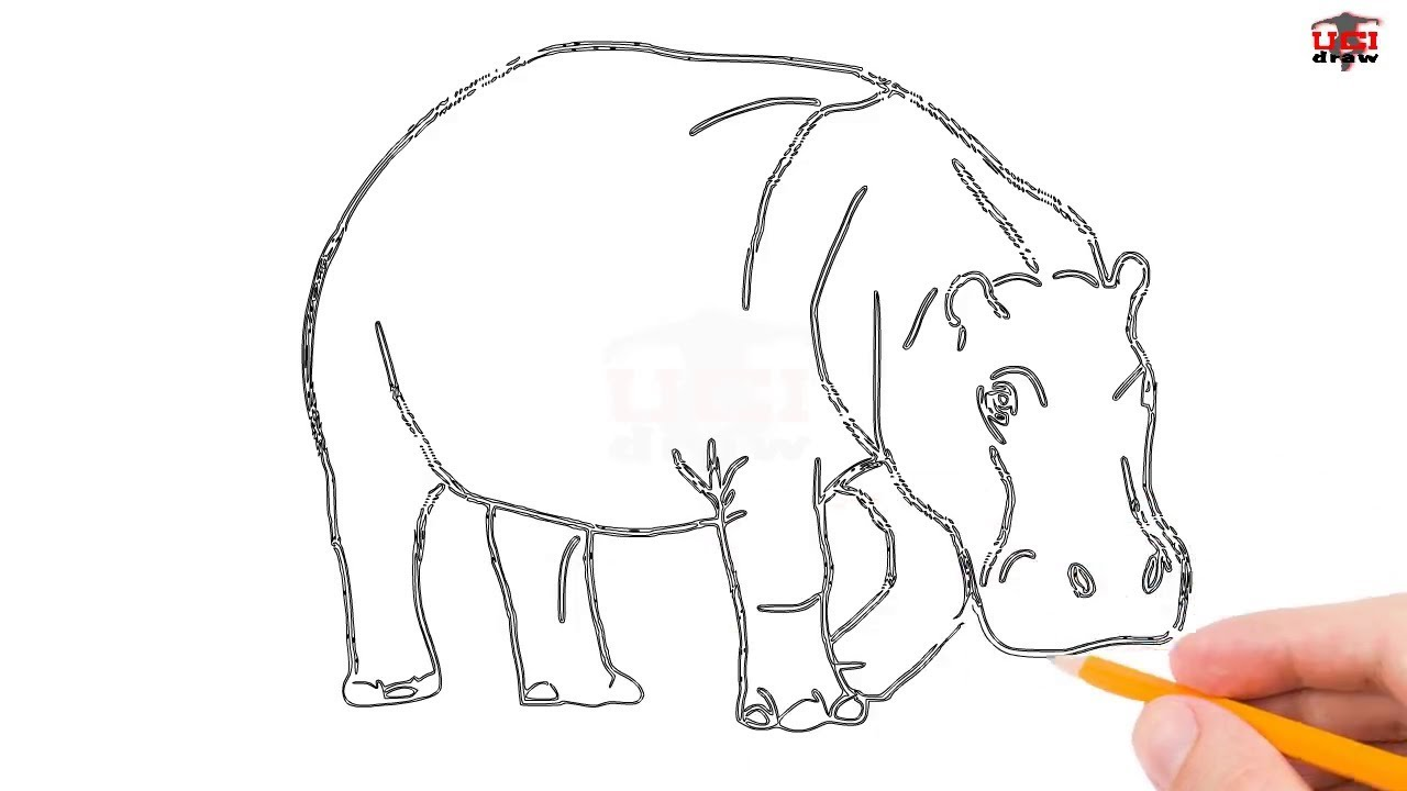how to draw a hippo step by step easy for beginners kids simple