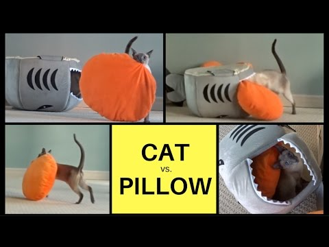 Cat vs. Pillow