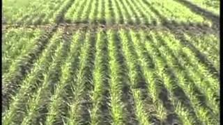 गेहूं की खेती में प्रबंधन कर किसान भाई कमा सकते हैं अच्छा लाभ