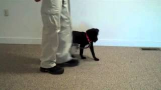 Dog Training In Maryland   Low Conflict Indirect Reward System1