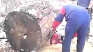 drwale w lesie czesc 4 dolpima PS 390 i stihl