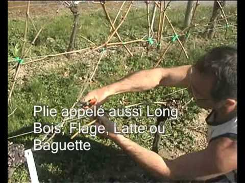 la taille de la vigne chez jardivigne youtube. Black Bedroom Furniture Sets. Home Design Ideas