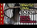 Perkutut Lokal Gacor Bagus Untuk Pancingan Suara Burung Perkutut Lokal Gacor  Mp3 - Mp4 Download
