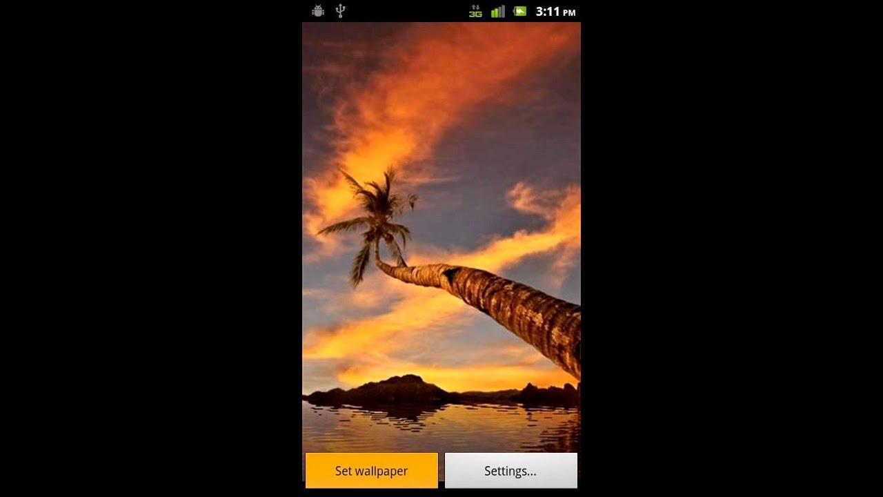 Palm tree sunset reflections live wallpaper android market youtube - Palm tree wallpaper for android ...