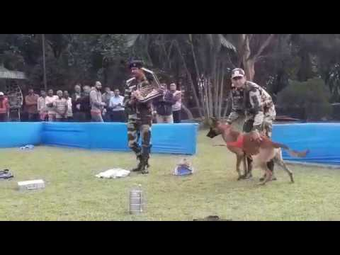 Forest Dept introduce 3 conservation dogs 2 prevent wildlife crime