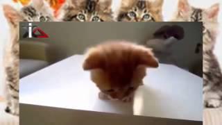 кошки и собаки cat dog