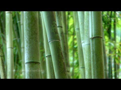 Zen Garden- Fifty Shades of Green - No Music/Nature Sounds Only