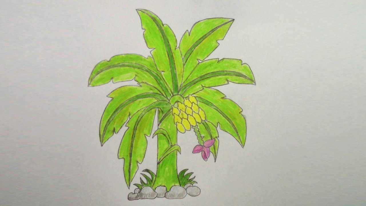 How to draw colour pencil banana tree step by step very easy