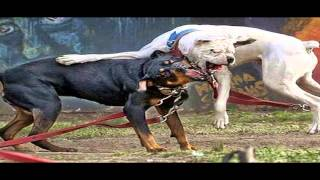 Correcting Aggressive Behavior In Dogs