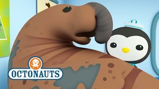 octonauts lets help the elephant seal
