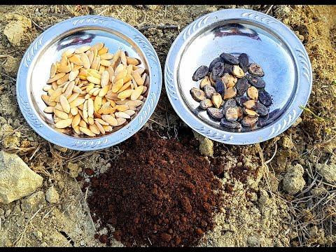 hobi bahçesi organik kavun, karpuz ekimi