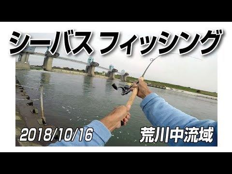 2018年10月16日 荒川中流域 シーバスフィッシング
