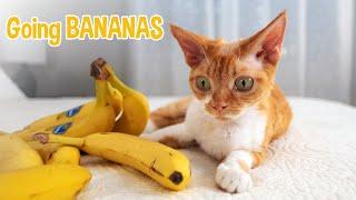 Bananas Over You: A Love Song