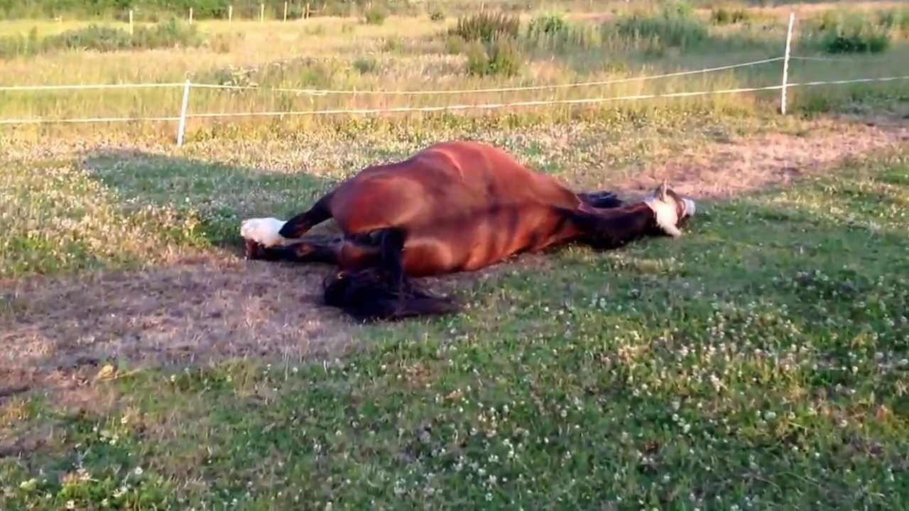 Funny Farting Horse! Typical Male, Lifts His Leg To Do It ...  |Funny Horse Farts