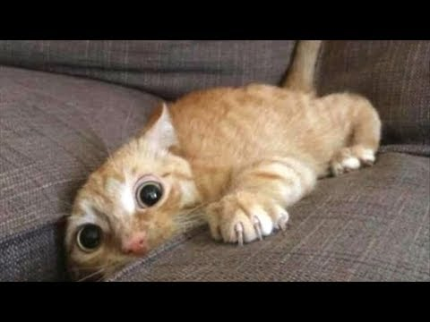 Best Try Not To Laugh - Funny Cats Fails Compilation