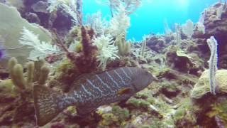 Diving Roatan with Sea Divers
