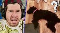 Este NO ES Un Perro !!