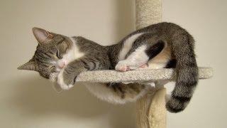 ポッコリお腹♪ 寝る猫 Pop belly♪ Cat Sleeping