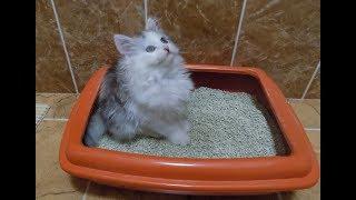 Что нужно купить котенку?
