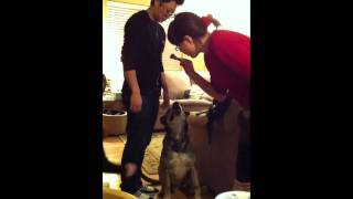 How To Weight A German Shepherd