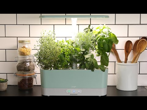 Grow Fresh Herbs in your own home