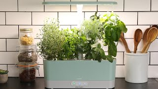 How To Create Your Own Herb Garden