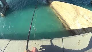 Bridge Fishing in the Keys: Duck Key
