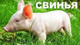 Развивающее видео для детей  Домашние животные и их звуки
