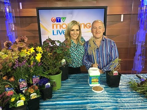 Getting Ready for Spring Gardening  Tips and Tricks to Get a Good Start for the New Season