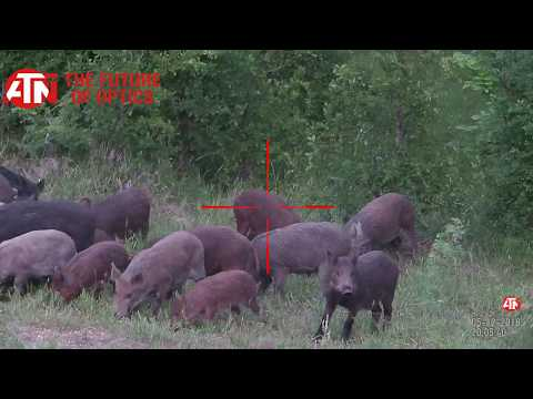 East Texas Wild Hogs Receiving Toe Tags Compilation