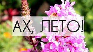 ЛЕТО #лето #пермь #летовперми #пчелы #цветы(Без чего лето не лето? ------------------------------------------------ Instagram ‣ https://www.instagram.com/thejullette/ Blog ‣ http://thejullette.blogspot.com/ VK..., 2015-02-05T07:56:22.000Z)