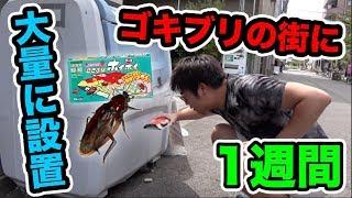 【検証】1週間ゴキブリホイホイを大阪難波に大量に設置したら何匹捕まえれる?【閲覧注意】 thumbnail