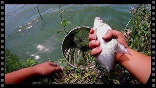 Рыбалка на самодельную прикормку. Улов лещ и караси.