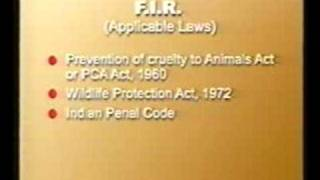 Indian Animal Laws - How To Lodge F.i.r