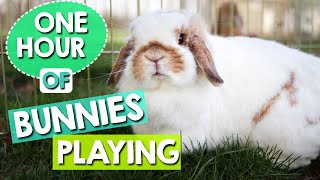 Bunnies Playing - 1 HOUR of Relaxing Bunny Cam Video!