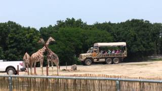 Six Flags Safari Off Road Adventure - (Part 5) Camp Adventura (Giraffes)