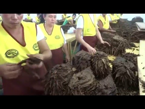 Nicaragua cigar festival 2016 plantation Visit and factory t