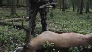Охота на оленя на реву с подхода.flv