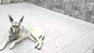 собака дергается
