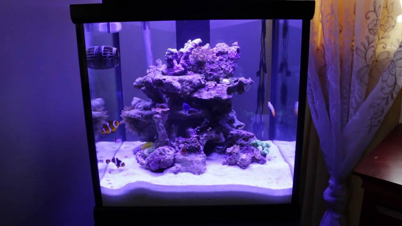 14 new 30 gallon oceanic cube youtube for 30 gallon long fish tank