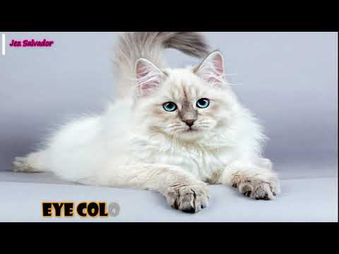 Top 10 Most Popular Cat Breeds in the World