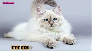 Top 10 Most Popular Cat Breeds in the World 2020