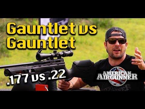 Umarex Gauntlet 177 vs 22 Air Rifle Gun Review Racoon Hunt : American  Airgunner