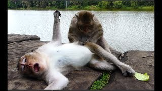 What mommy doing on her baby monkey, Good mom massage for baby?