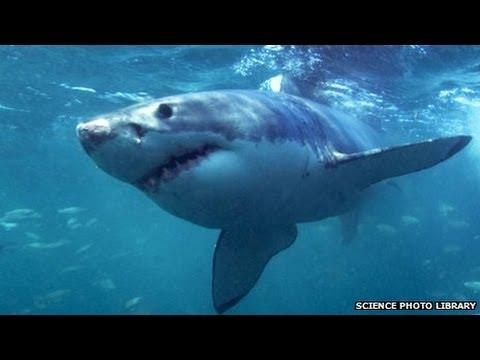 Shark kills fisherman in kayak off coast of Hawaii