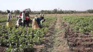Ethiopia: Exciting Innovations in Agriculture and Health
