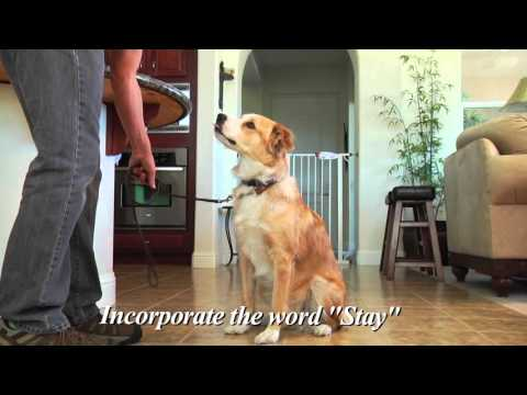 Bil-Jac Training Tips - High Energy Dogs
